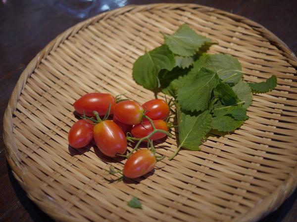 20120825収穫