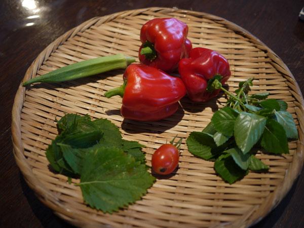 20120828収穫