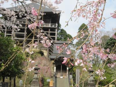 桜の笠森8