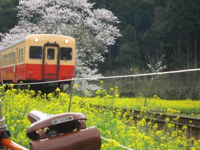桜の小湊18