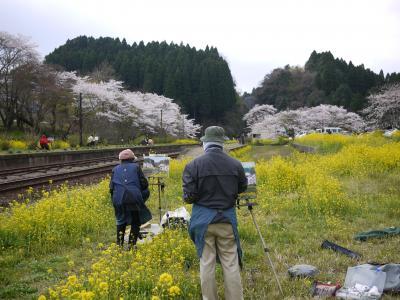 桜の小湊14