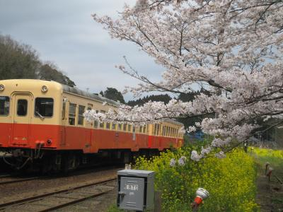 桜の小湊19