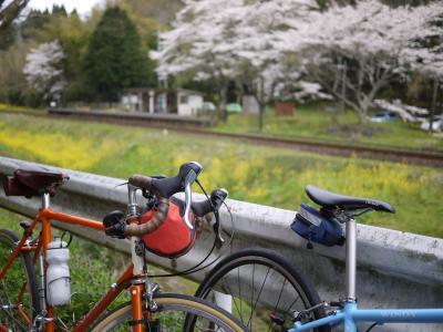 桜の小湊25