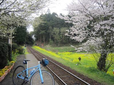 桜の小湊26