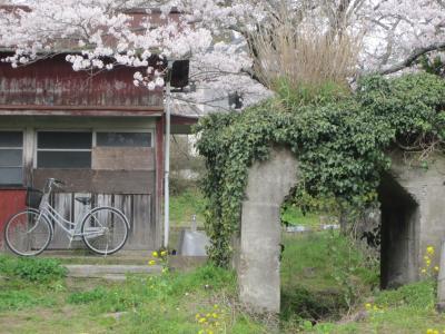 桜の小湊27