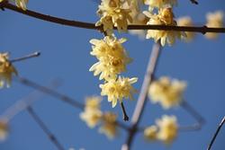 細い花ビラ