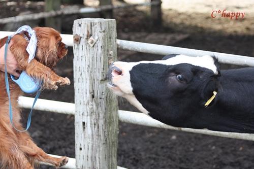 牛さんとこんにちわ