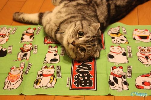 福運招き猫