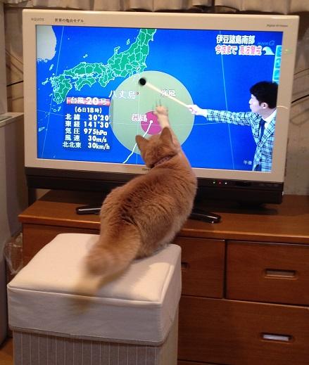2014-11-06(best-hirai-chaba)small.jpg