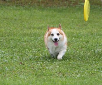 Field Dogs Garden