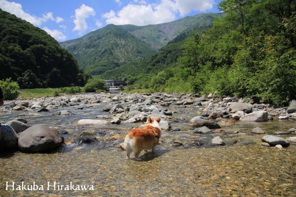 平川川遊び