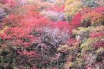 004紅葉がきれい