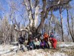 18ブナの巨古木の前で記念写真