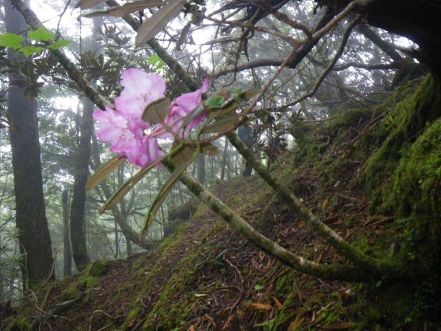 17股ノ沢林道の風景-1