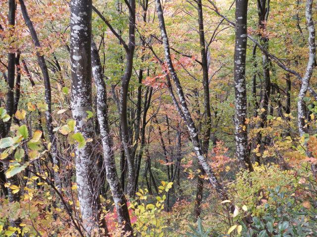 15 黒白のコントラストが見事な雨後のブナ美林