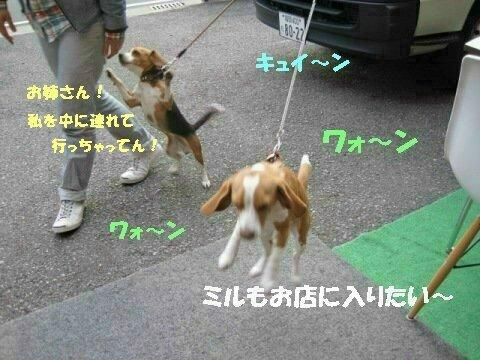 IMG_0683_sh01.jpg