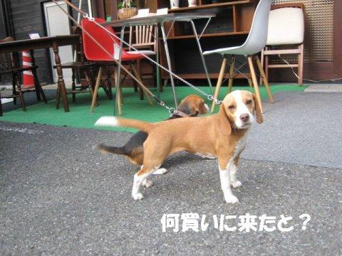 IMG_0700_sh01.jpg