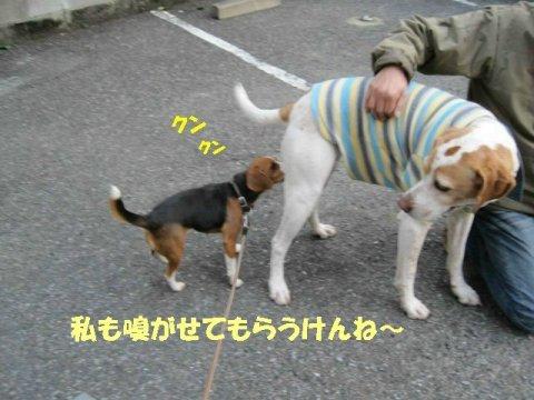 IMG_0736_sh01.jpg