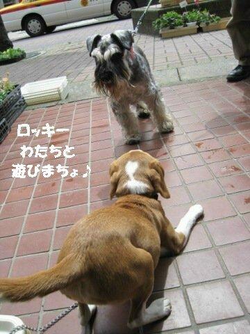 IMG_0762_sh01.jpg