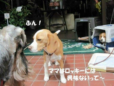 IMG_0770_sh02.jpg