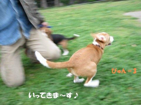 IMG_1074_sh01.jpg
