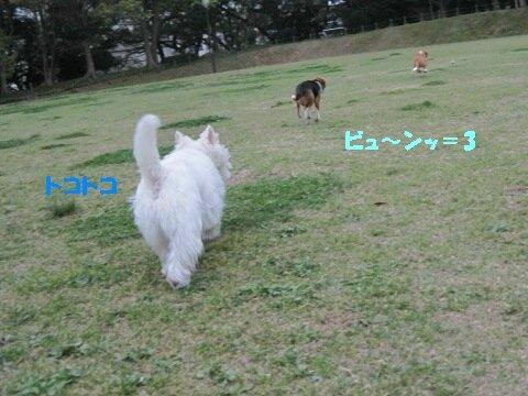 IMG_1145_sh01.jpg