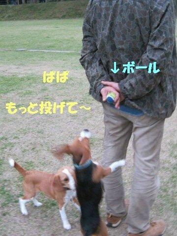 IMG_1154_sh01.jpg