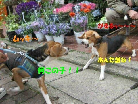 IMG_1289_sh02.jpg