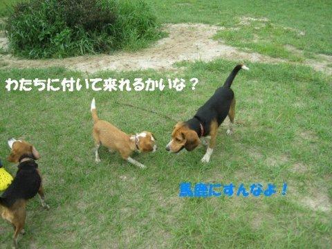 IMG_2135_sh01.jpg