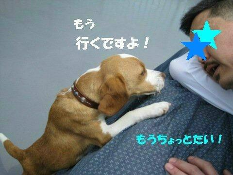 IMG_2449_sh01.jpg