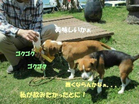 IMG_2462_sh02.jpg