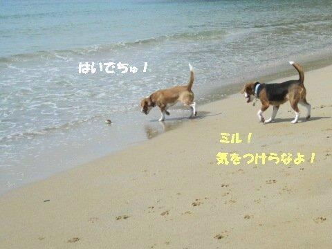 IMG_2533_sh01.jpg