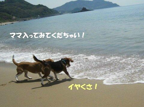 IMG_2538_sh02.jpg