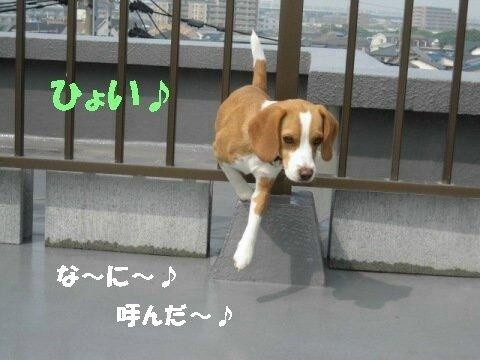 IMG_2708_sh01.jpg