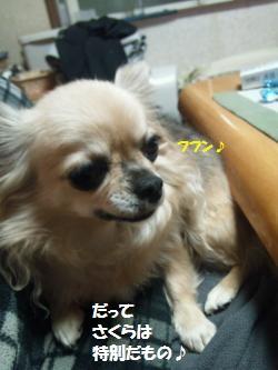 DSC_0879_convert_20131220113051.jpg