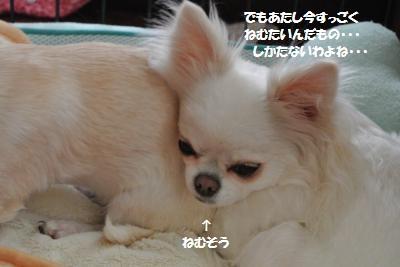 DSC_0930_convert_20131127110746.jpg