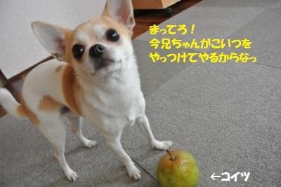 DSC_0977_convert_20131129102837.jpg