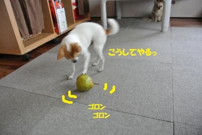DSC_0996_convert_20131129102858.jpg