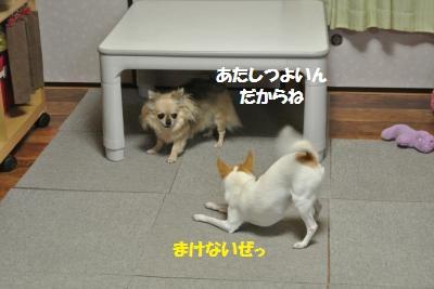 DSC_1038_convert_20131129102708.jpg