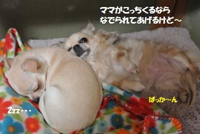DSC_1049_convert_20131203103523.jpg