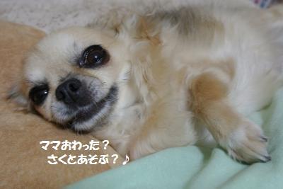 DSC_1112_convert_20131204091636.jpg