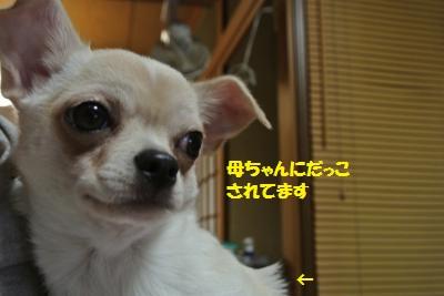 DSC_1132_convert_20131206102010.jpg