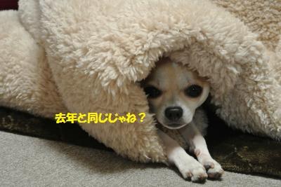 DSC_1543_convert_20131217112249.jpg