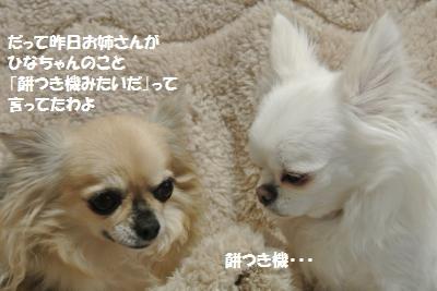 DSC_1548_convert_20131218110525.jpg