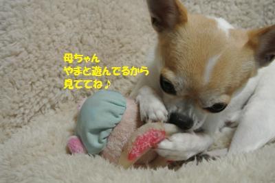 DSC_1575_convert_20131219103946.jpg