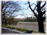 瀬戸川の桜。