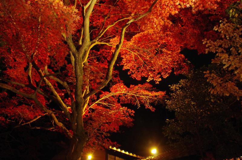 百草園紅葉ライトアップ