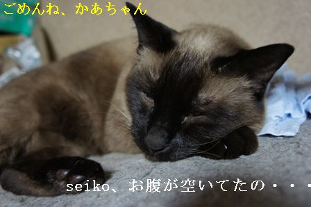 DSC00149_20100620180156.jpg