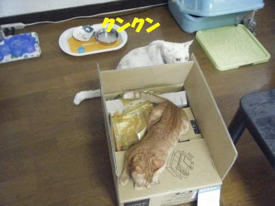 2010_06120317.jpg