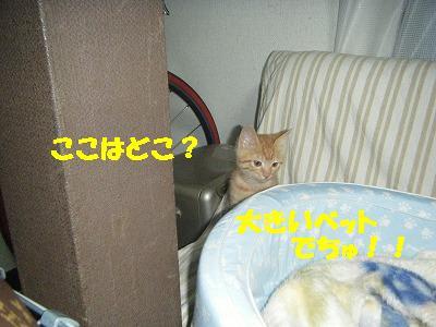 2010_061500011.jpg